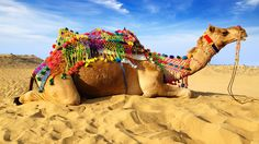 Visions of India - Twelve Day Camel Fest & Rajasthan Tour