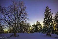 A shot of Bowring Park at dusk. #photography