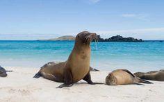 Isla Baltra, Galapagos Islands Cruise Port