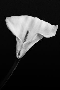 Photograph Natural Elegance by Angelo Dau on 500px