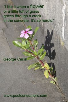 There's actually a piece to this quote we cut off. If you know George Carlin then you know why! #flowers #nature