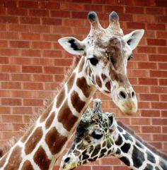 Denver Zoo-January 2013