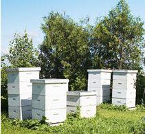 We Love Honey - New Zealand Honey Producers