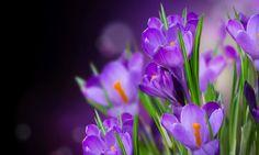 Ideas for wall paper flores lilas Amazing Flowers, My Flower, Beautiful Flowers, Beautiful Gif, Purple Flower Names, Purple Flowers, Flowers Gif, All Things Purple, Gerbera