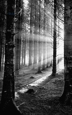 Treeshadow. Light flooding through forest                                                                                                                                                                                                                                                      					  				Light flooding through forest