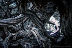 ~Lindsay Adler Fashion Photo  Gnarled