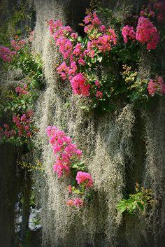 Flowers & Moss - Savannah, Georgia