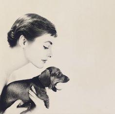 Audrey and daschund