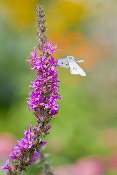 Flying Butterfly  by Melanie Viola