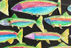 Apex Elementary Art: swimming along (rainbow trout)