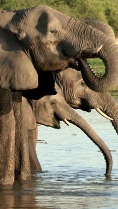 Wild Elephant, Elephant Love, Virtual Museum Tours, Virtual Tour, Beautiful Creatures, Animals Beautiful, Cute Animals, Elephant Photography, Animal Photography