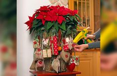Christmas Wreaths, Christmas Decorations, Table Decorations, Holiday Decor, Euphorbia Pulcherrima, Diy Calendario, Navidad Diy, Poinsettia, Beautiful Christmas