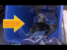 Hope For Paws rescues a mom and a puppy living in a trash can. Please share. - YouTube