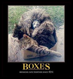 BOXES....bringing cats together