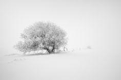 Along the fenceline II by Sandra Herber Never Dead, Foggy Morning, Winter Wonder, The Great Outdoors, Explore, World, Wonder Land, Bones, Art