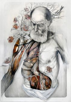 A beleza artistica da anatomia humana
