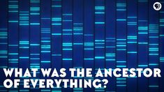 What Was the Ancestor of Everything? PBS Space Time and It's Okay To Be Smart) Life Science, Science Nature, Pbs Space Time, History Of Video Games, Physics And Mathematics, Microbiology, Ny Times, Science And Technology, Infographic