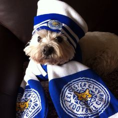Love this Leicester City Football, Leicester City Fc, Funny Pictures, Funny Pics, Premier League, Dog Cat, England, Club, Board