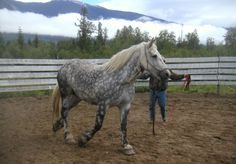 Trail Tips: The Pushy Horse