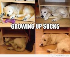 Growing Up Sucks For Dogs Too