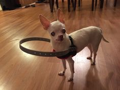 Blind Dog's Family Invents A Device That Changed His Life