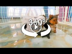 360° Video of Puppies - Dog Videos