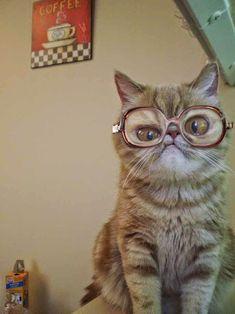 Funny Cat Wearing Glasses