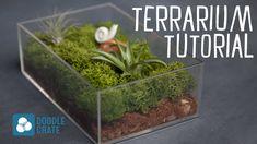 How to Create an Air Plant Terrarium