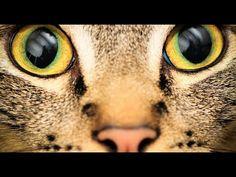 il mondo visto con gli occhi degli animali