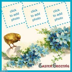 EASTER GREETING CHICKIE FRAMES