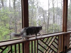Screened in porch with railings for kitty to walk on