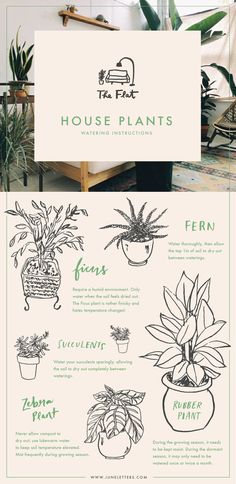 The Flat: House Plants Watering Instructions — June Letters Design