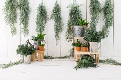 Spring Garden Baby Photo Booth Backdrop SH596 – Dbackdrop Vinyl Photo Backdrops, Photo Booth Backdrop, Backdrop Stand, Custom Backdrops, Plants For Planters, Real Plants, Potted Plants, Planter Pots, Easter Backdrops
