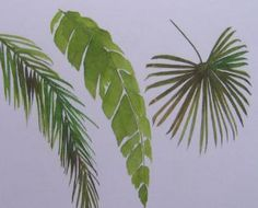 Jim's Watercolor Gallery - Painting Palm Trees More