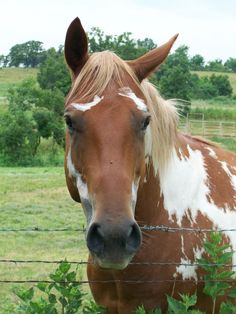 My Beautiful Paint Horse