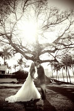 Beautiful picture of bride and groom kissing in sepia with huge tree in background with sun peaking through the branches.