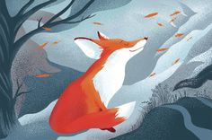 Main foxy2