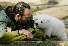 Polarbear Knut (Berlin)