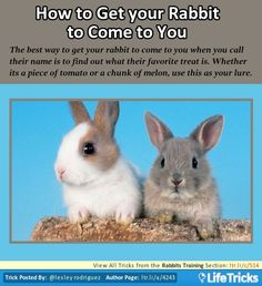 Rabbits Training - Know Your Rabbit's Favorite Treat