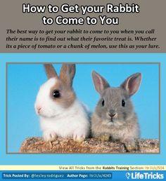 Rabbits Training - Know Your Rabbit's Favorite Treat