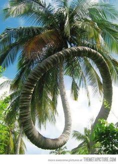 Amazing tree ...