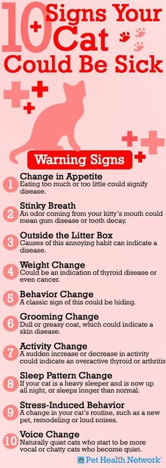 It's better to be safe than sorry! Check out Dr. Phil Zeltzman's top 10 signs your cat could be sick! #cats #pets #vet Also click the photo to be directed to the full article! :)