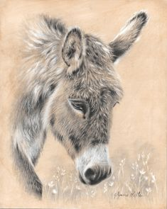 """""""Flower"""" by Glynnis Miller Pencil and Acrylic ~ 10 x 8 Animal Paintings, Animal Drawings, Art Drawings, Donkey Drawing, Baby Animals, Cute Animals, Equine Art, Pastel Art, Watercolor Animals"""