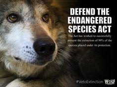 Don't let Congress dismantle the Endangered Species Act! @POTUS, please #VetoExtinction Please Sign & Share. Thank you