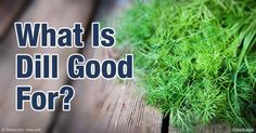 Dill is used for soothing gastrointestinal issues like diarrhea, heartburn and ulcers. It is also beneficial to your heart, bones, oral health and more. http://articles.mercola.com/sites/articles/archive/2016/03/28/health-benefits-dill.aspx