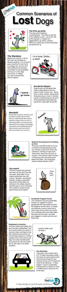Common Scenarios of Lost Dogs (Infographic) | PetHub
