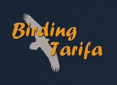 Birding Tarifa. Birdwhatching & Conservation