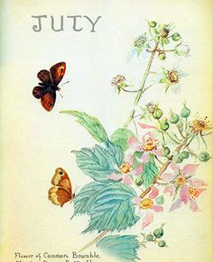 July: Blackberries and butterflies - Morning Earth Artist/Naturalist Edith Holden Edith Holden, Vintage Botanical Prints, Botanical Art, Vintage Art, Botanical Drawings, Vintage Paper, Seasons Of The Year, Months In A Year, 12 Months