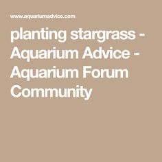 A very generous poster here sent me a good sized quantity of stargrass (thank you! My observations: The stem is brittle, and Aquascaping, Planting, Aquarium, Advice, Community, Goldfish Bowl, Plants, Tips, Aquarium Fish Tank