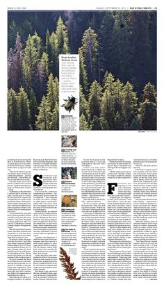 47 ideas design editorial layout newspaper for 2019 Editorial Design Layouts, Editorial Design Inspiration, Magazine Layout Design, Graphic Design Layouts, Graphic Design Inspiration, Magazine Layouts, Design Posters, Web Design, Page Design